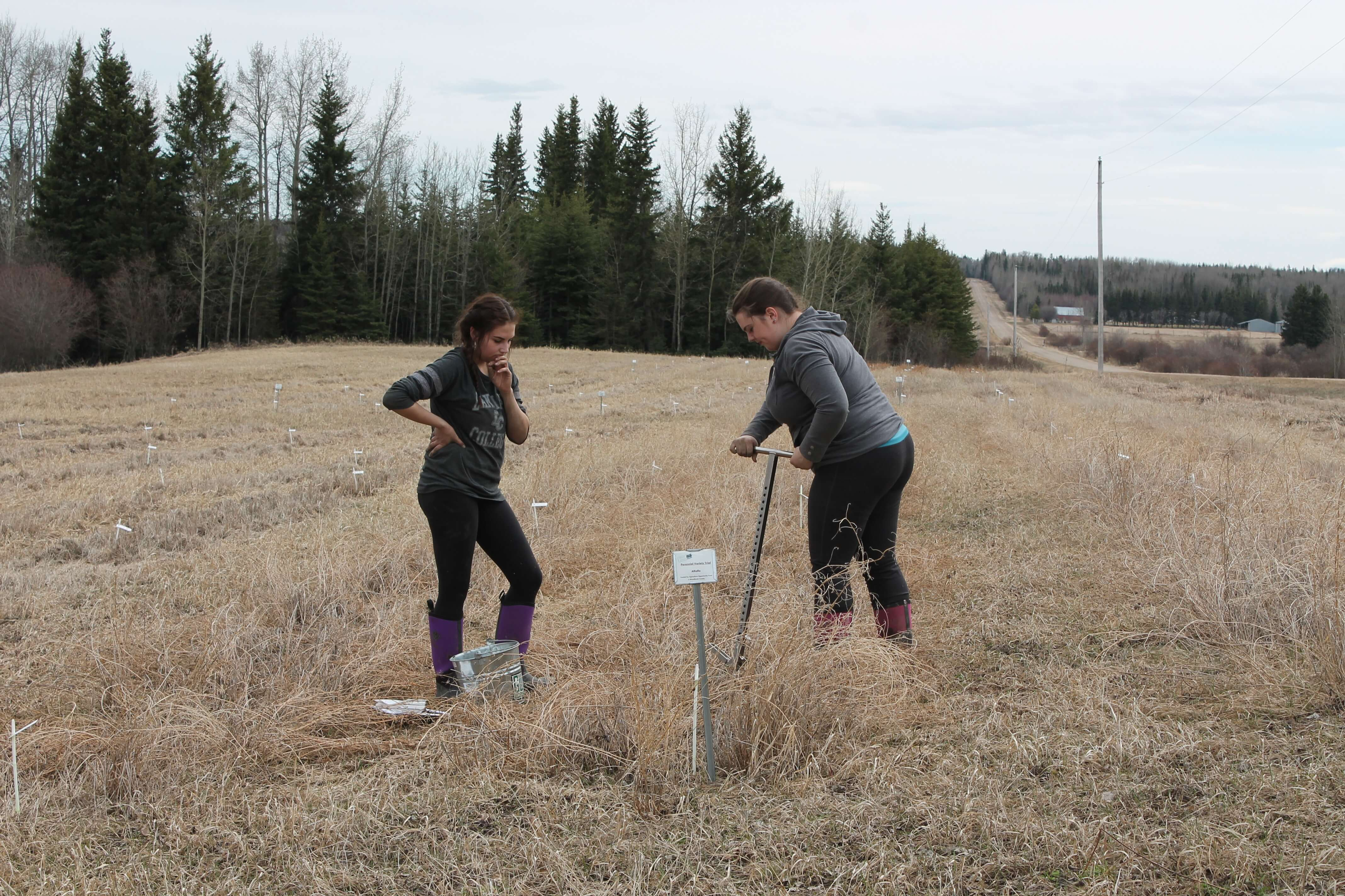 Soil Sampling Woodlands.JPG